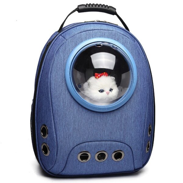 Cat in a blue pet carrier backpack