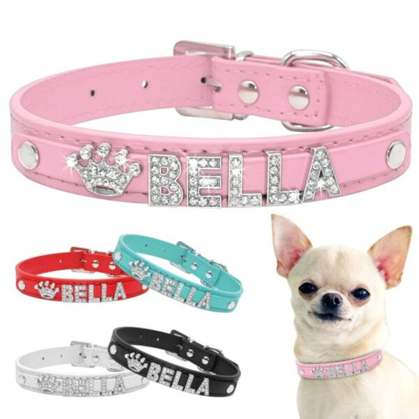 Chihuahua wearing one of bling dog collars from leather