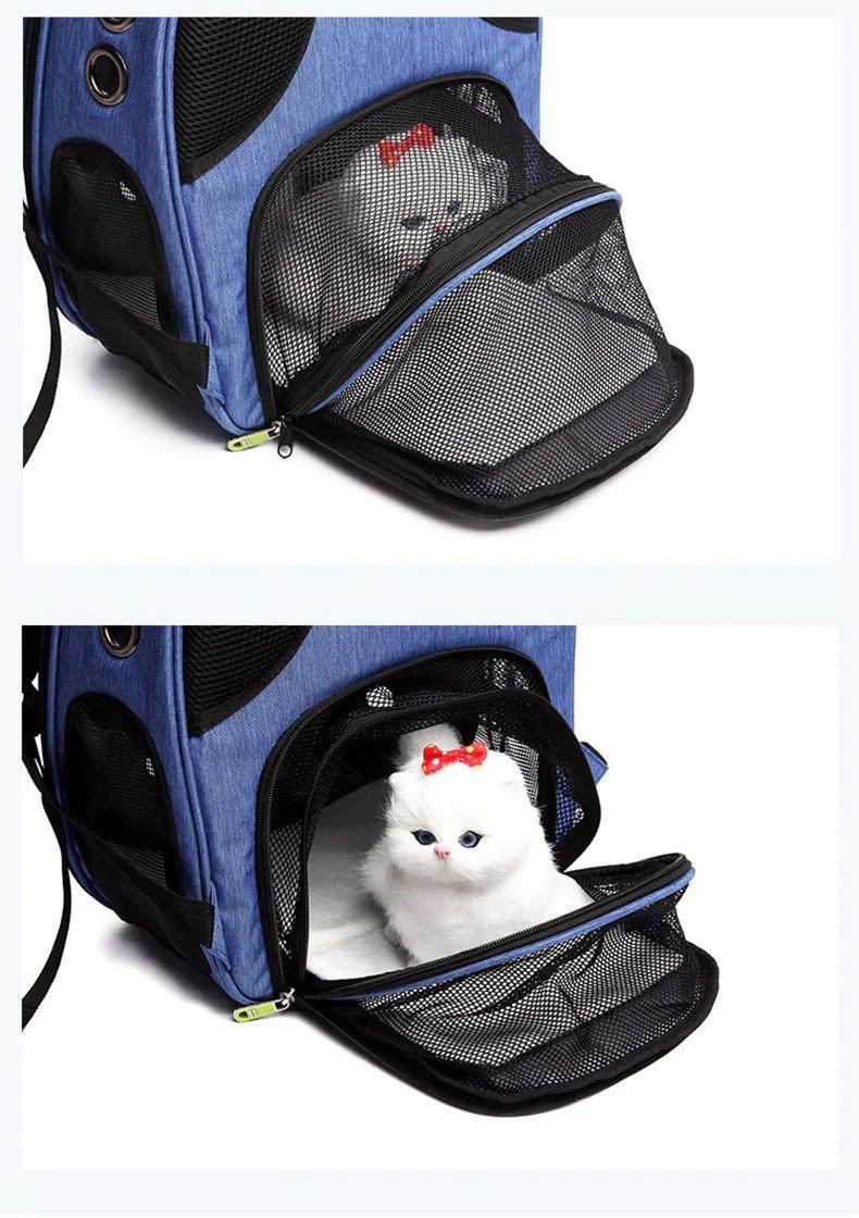 Cat in a Blue Pet Carrier Bag