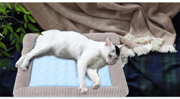 Cat on a Cooling Pet Bed