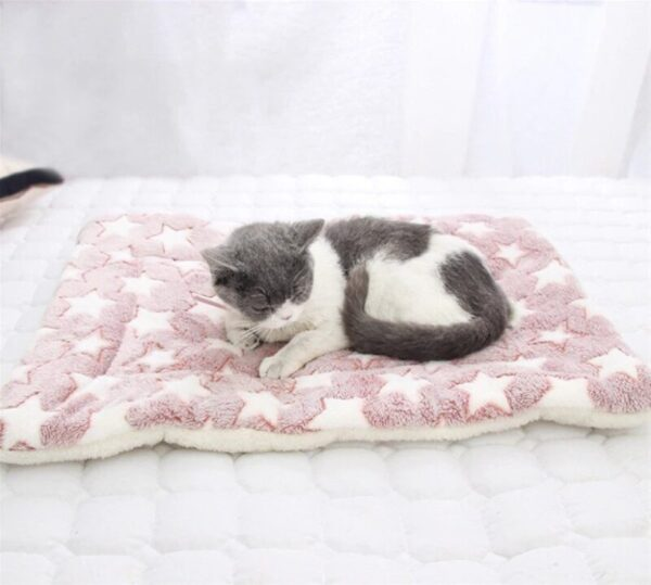 Cat on a blanket