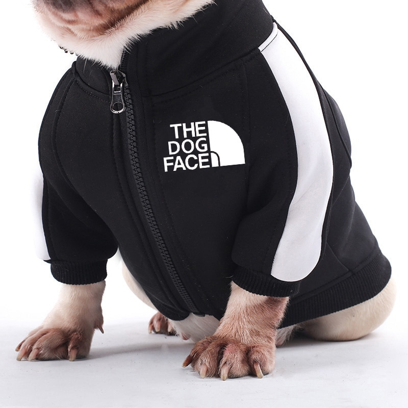 Frenchie wearing a dog jacket