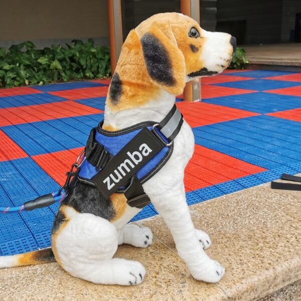 Beagle Toy wearing a personalised dog vest