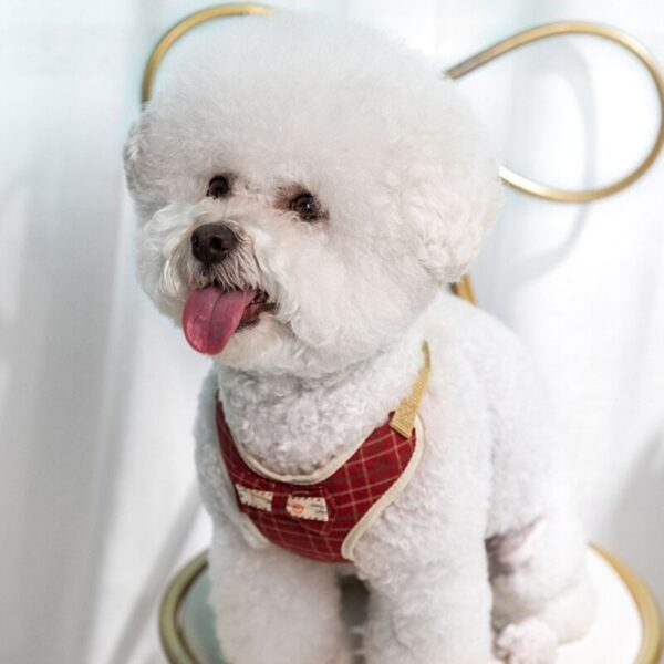Cute puppy with red dog harness for small dogs