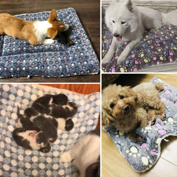 Pets on thick cozy warm pet blankets