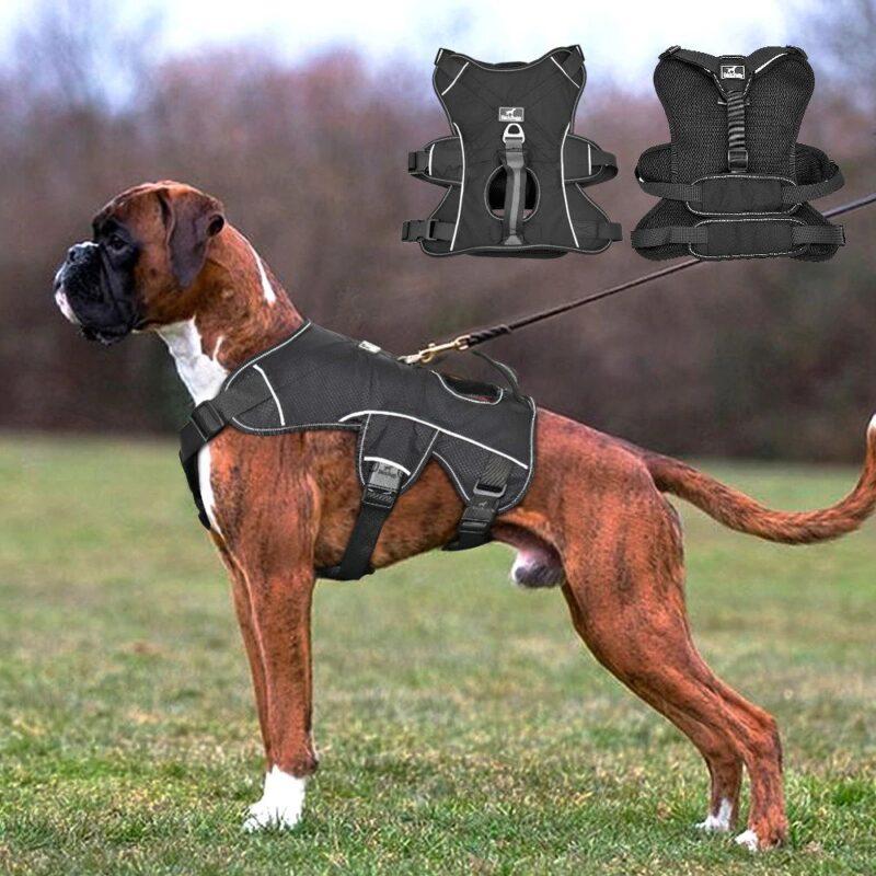 Boxer weraring a nylon dog harness
