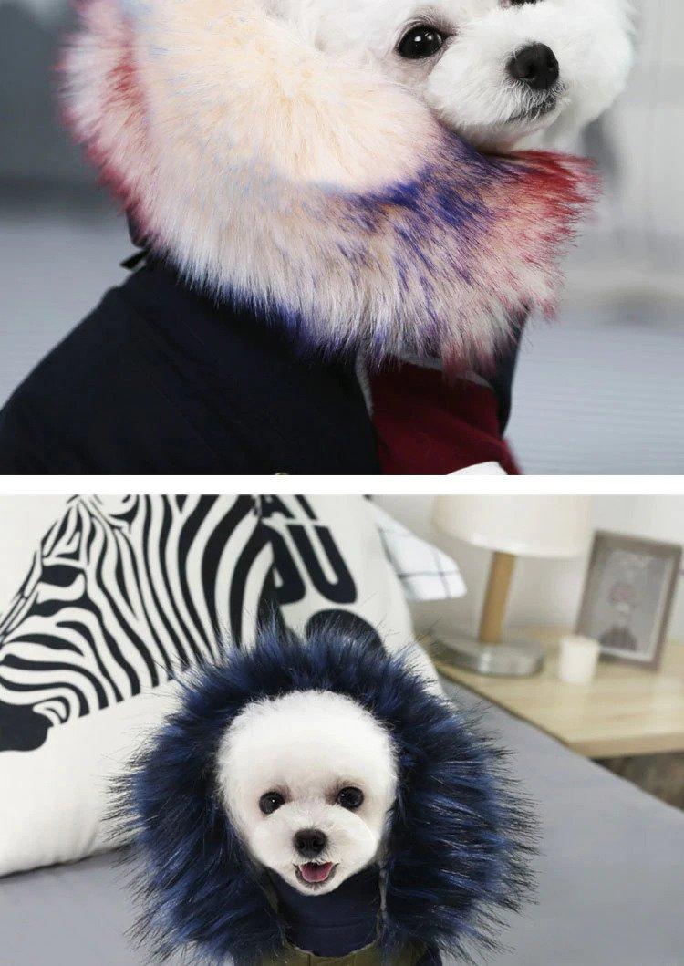 Dog in a faux fur jacket