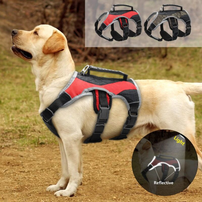 labrador wearing a red reflective dog harness