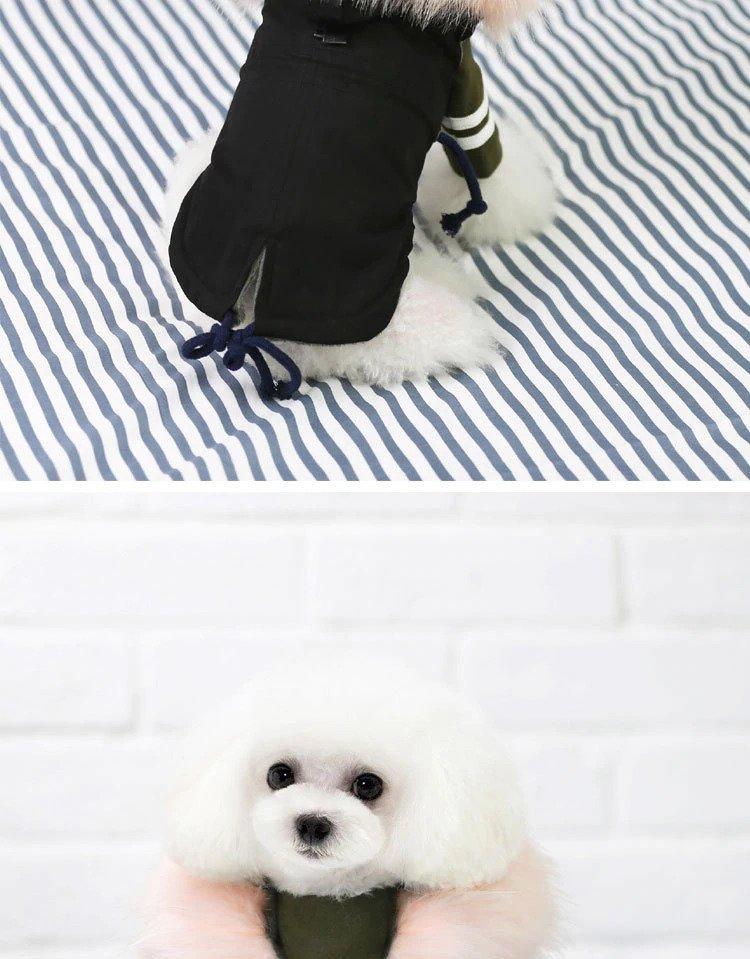 removable hood on a dog jacket