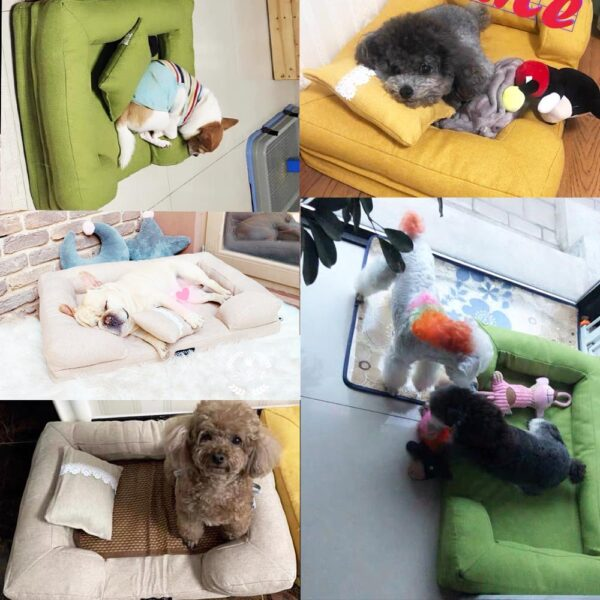 Customer showcase of their purchased pet sofas
