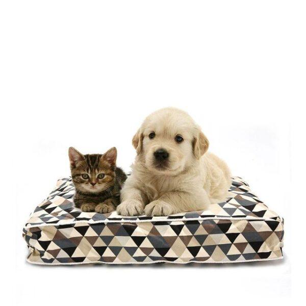 dog and cat on soft pet mattress